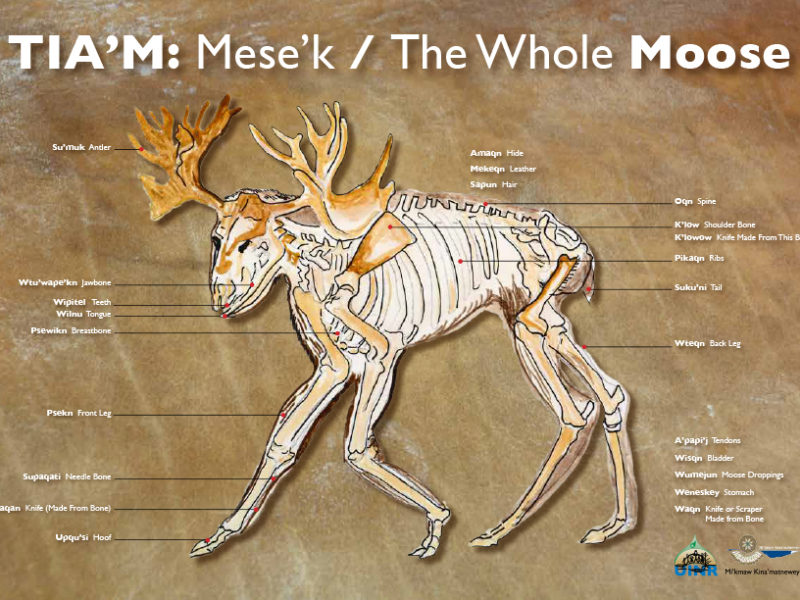 TIA'M: Mese'k / The Whole MOOSE