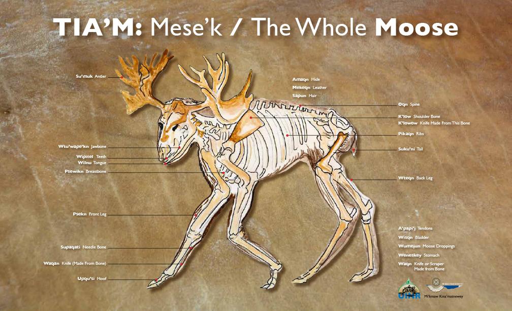 TIA'M: Mese'k / The Whole MOOSE